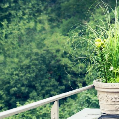 5 Allergy Free Flowers to Plant Around your Home